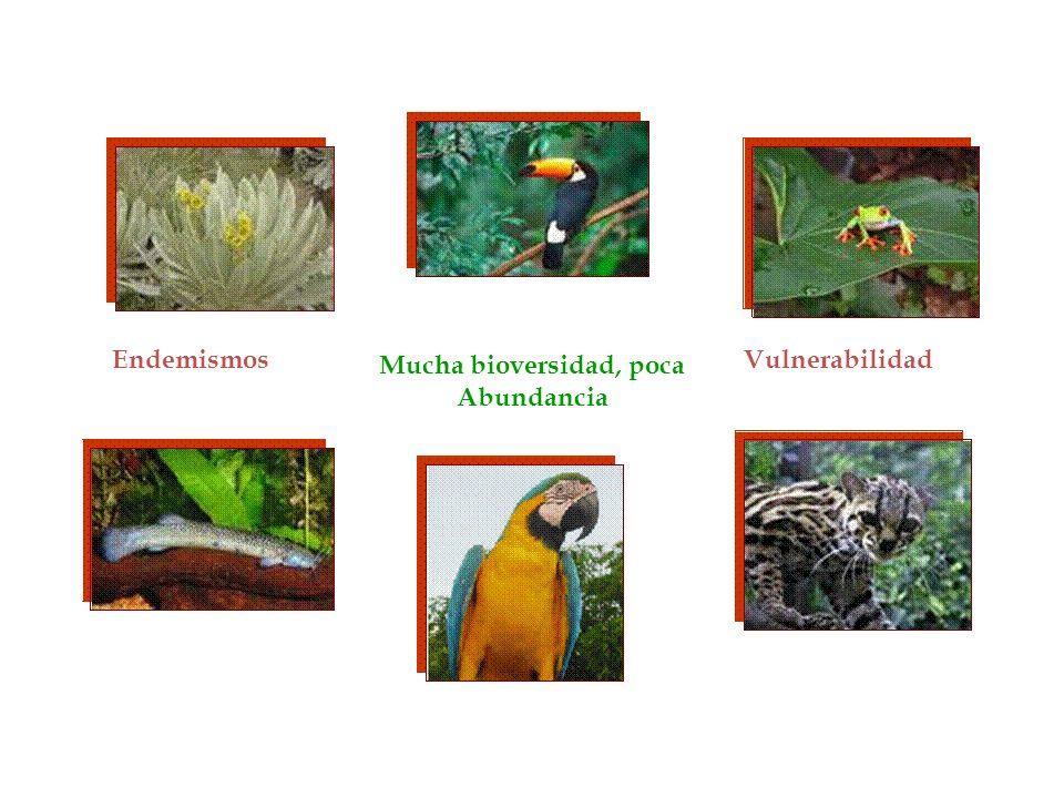 Mucha bioversidad, poca Abundancia EndemismosVulnerabilidad