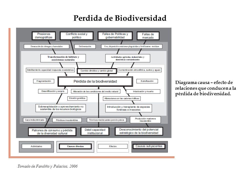 Perdida de Biodiversidad Diagrama causa – efecto de relaciones que conducen a la pérdida de biodiversidad. Tomado de Fandiño y Palacios, 2006