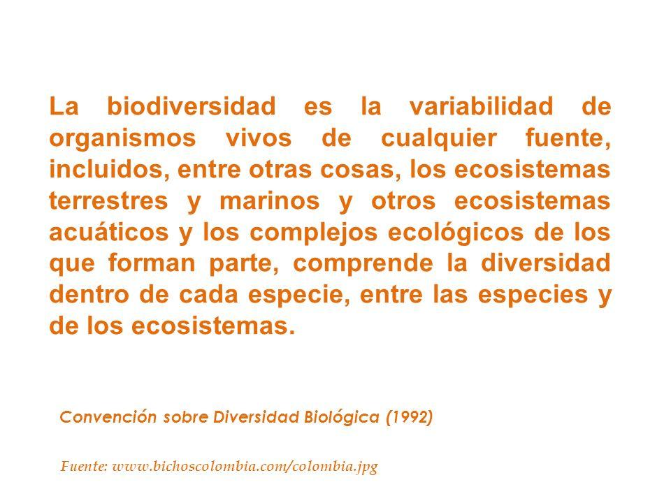 La biodiversidad es la variabilidad de organismos vivos de cualquier fuente, incluidos, entre otras cosas, los ecosistemas terrestres y marinos y otro