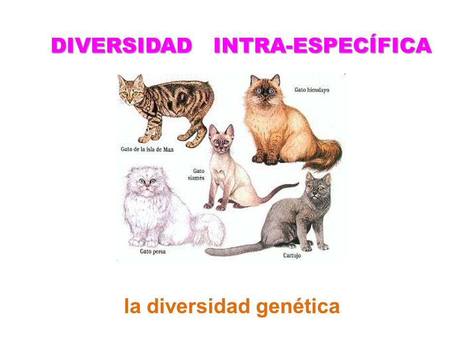 DIVERSIDAD INTRA-ESPECÍFICA la diversidad genética