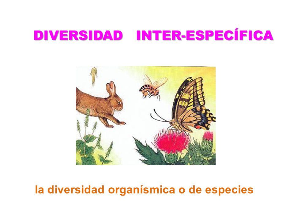DIVERSIDAD INTER-ESPECÍFICA la diversidad organísmica o de especies