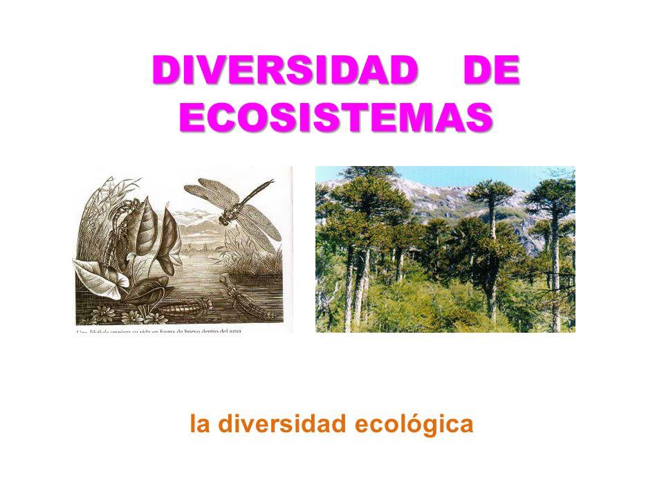 DIVERSIDAD DE ECOSISTEMAS la diversidad ecológica