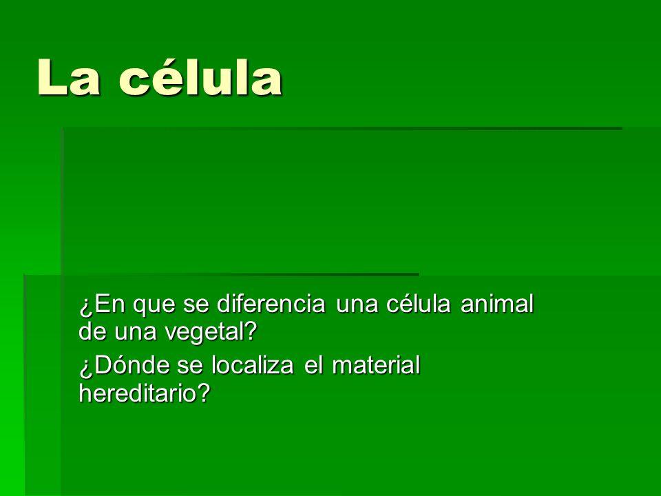 La célula ¿En que se diferencia una célula animal de una vegetal? ¿Dónde se localiza el material hereditario?