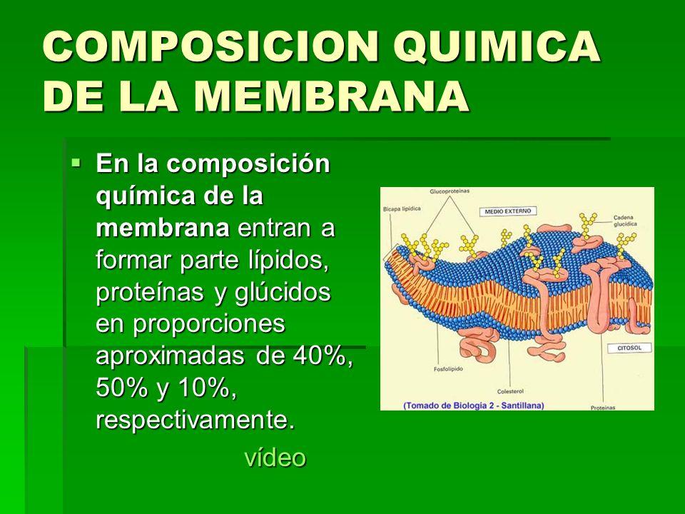 COMPOSICION QUIMICA DE LA MEMBRANA En la composición química de la membrana entran a formar parte lípidos, proteínas y glúcidos en proporciones aproxi