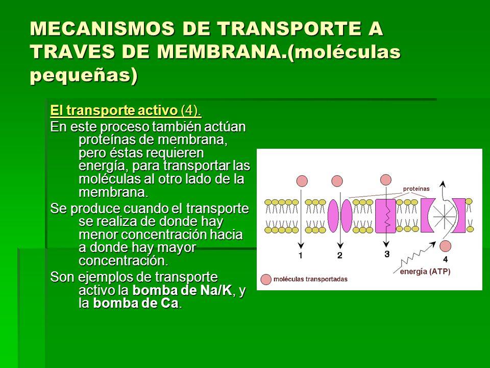 MECANISMOS DE TRANSPORTE A TRAVES DE MEMBRANA.(moléculas pequeñas) El transporte activo (4). En este proceso también actúan proteínas de membrana, per