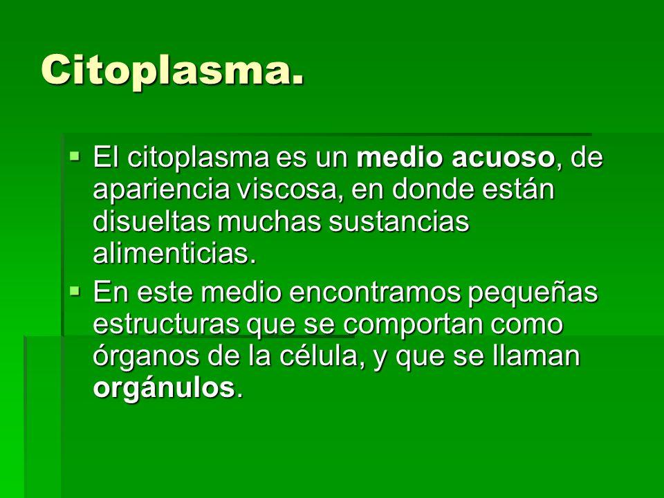 Citoplasma. El citoplasma es un medio acuoso, de apariencia viscosa, en donde están disueltas muchas sustancias alimenticias. El citoplasma es un medi