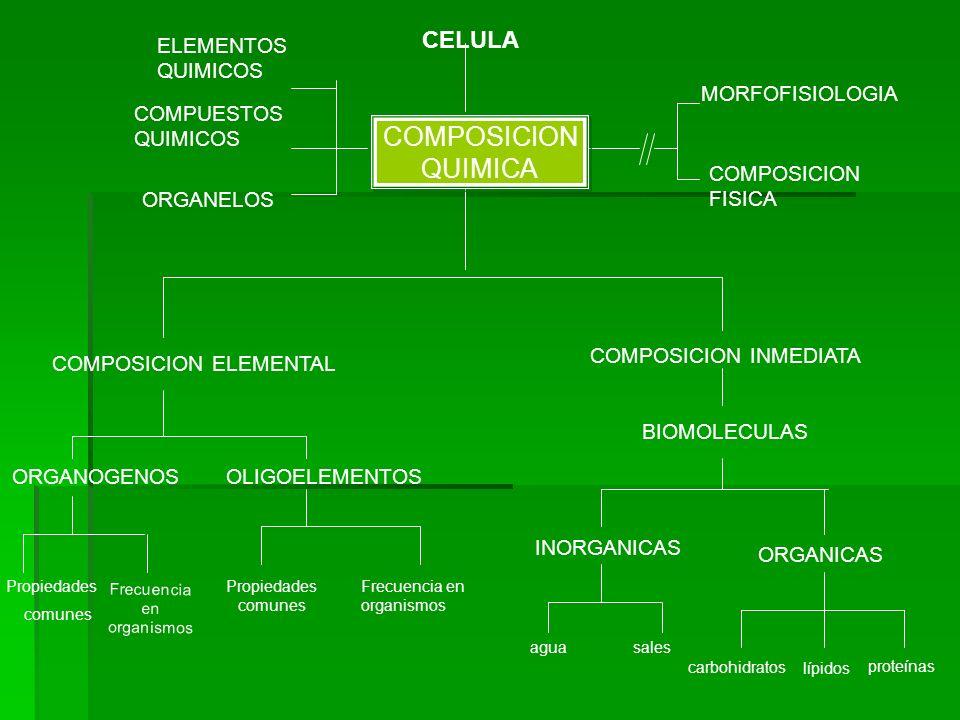 COMPOSICION FISICA Frecuencia en organismos ELEMENTOS QUIMICOS COMPUESTOS QUIMICOS ORGANELOS CELULA MORFOFISIOLOGIA COMPOSICION ELEMENTAL COMPOSICION