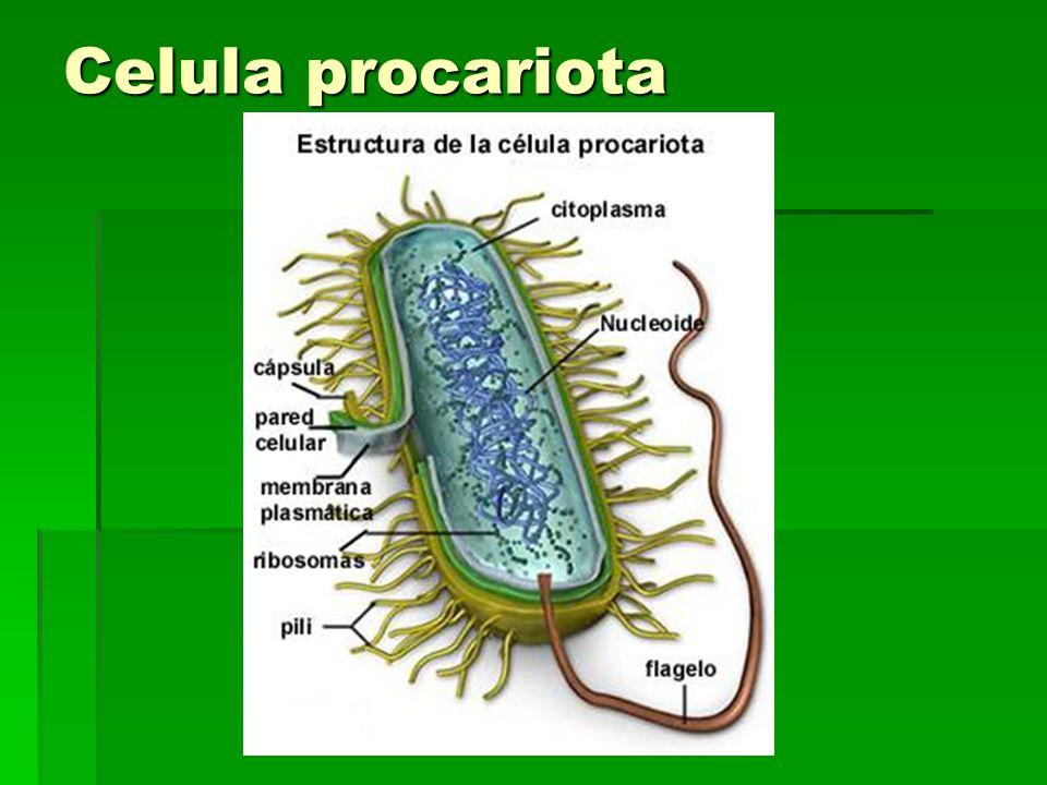 Características de la célula vegetal.