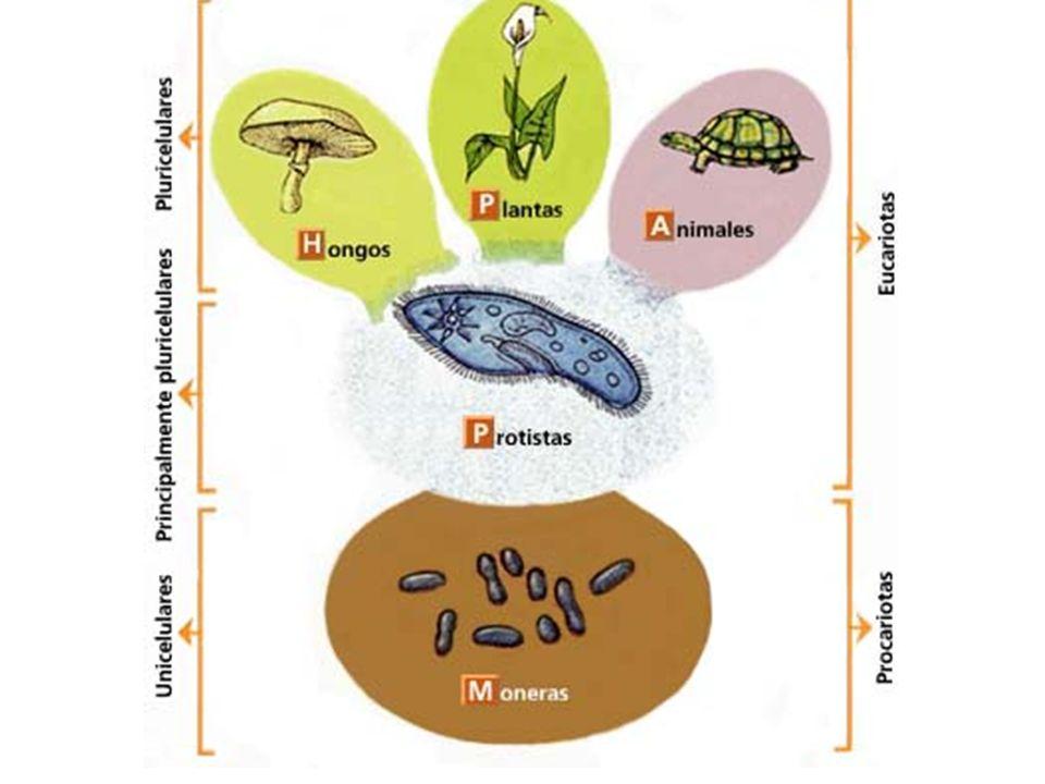 Cuadro en que se resumen las principales diferencias entre las plantas Mono y Dicotiledóneas.