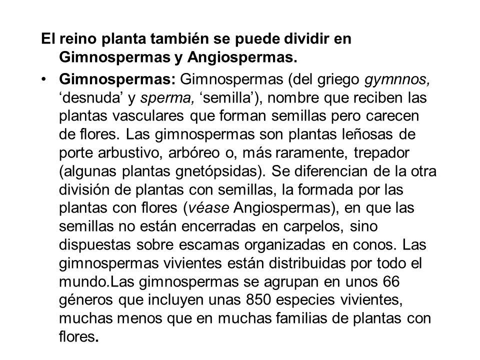 El reino planta también se puede dividir en Gimnospermas y Angiospermas. Gimnospermas: Gimnospermas (del griego gymnnos, desnuda y sperma, semilla), n