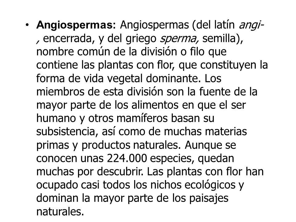Angiospermas: Angiospermas (del latín angi-, encerrada, y del griego sperma, semilla), nombre común de la división o filo que contiene las plantas con
