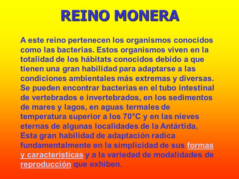 REINO MONERA A este reino pertenecen los organismos conocidos como las bacterias. Estos organismos viven en la totalidad de los hábitats conocidos deb
