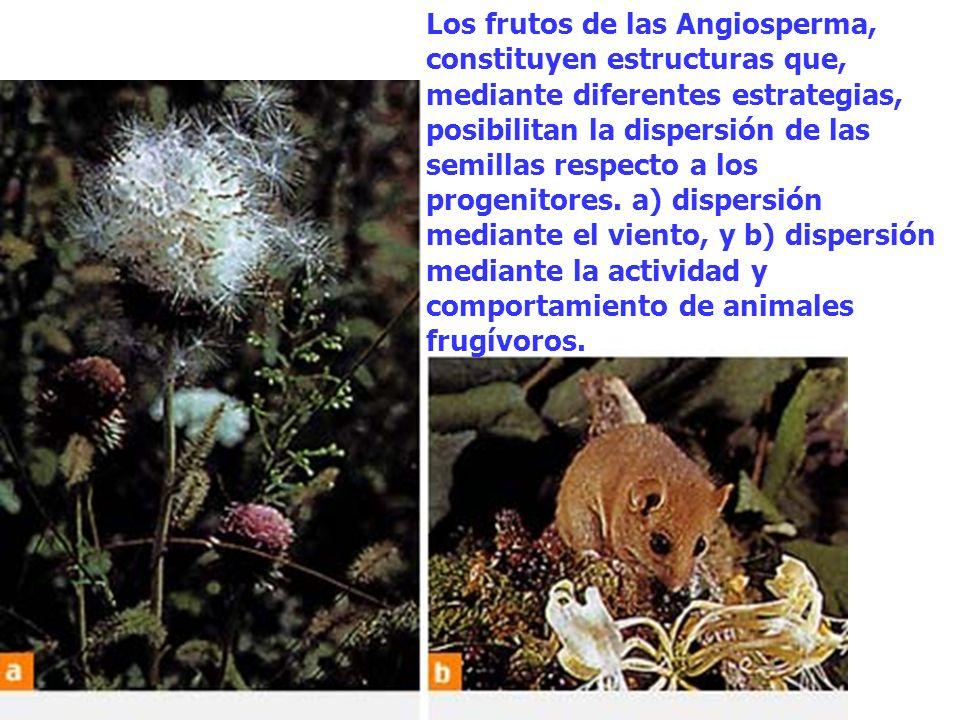 Los frutos de las Angiosperma, constituyen estructuras que, mediante diferentes estrategias, posibilitan la dispersión de las semillas respecto a los