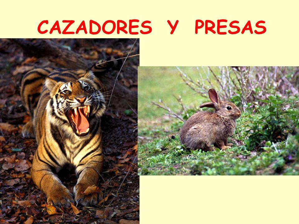 CAZADORES Y PRESAS