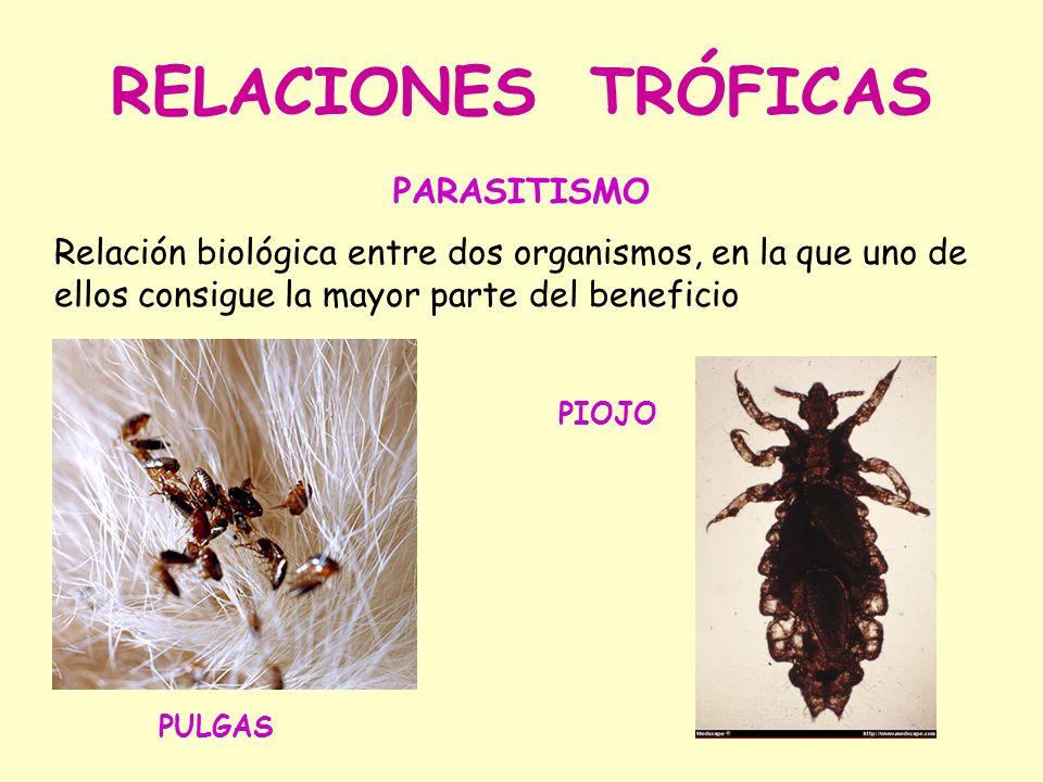 RELACIONES TRÓFICAS PARASITISMO Relación biológica entre dos organismos, en la que uno de ellos consigue la mayor parte del beneficio PULGAS PIOJO