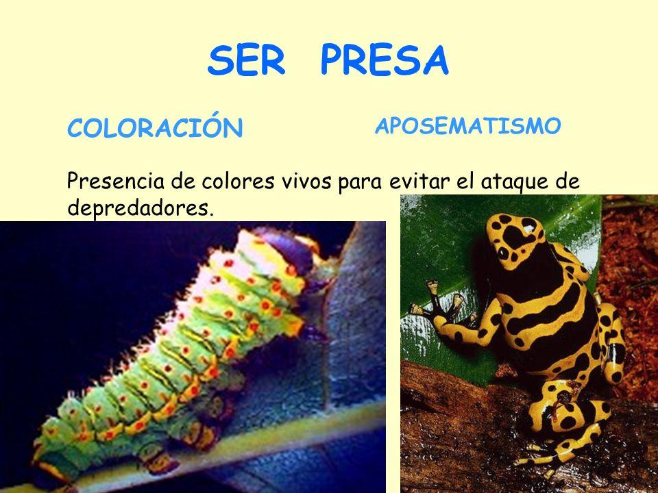 SER PRESA APOSEMATISMO Presencia de colores vivos para evitar el ataque de depredadores. COLORACIÓN