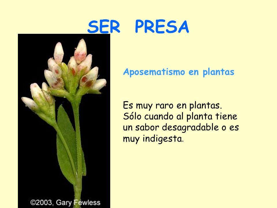 SER PRESA Aposematismo en plantas Es muy raro en plantas.