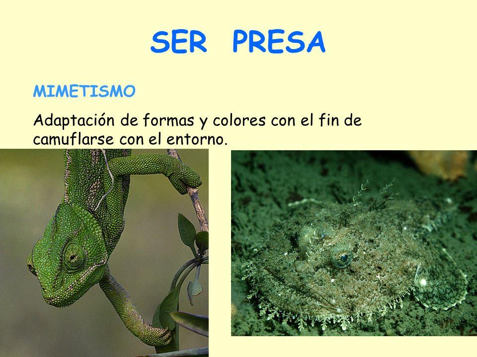 SER PRESA Aposematismo en plantas Es muy raro en plantas. Sólo cuando al planta tiene un sabor desagradable o es muy indigesta.