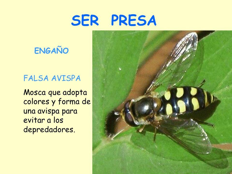 SER PRESA FALSA AVISPA Mosca que adopta colores y forma de una avispa para evitar a los depredadores.
