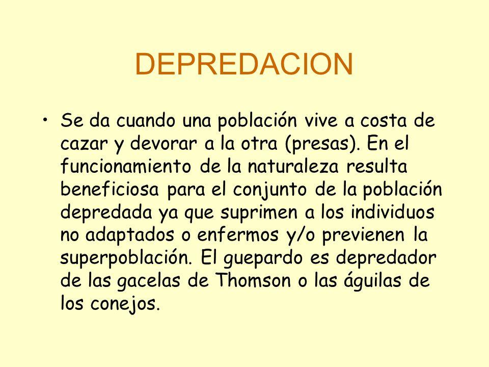 DEPREDACION Se da cuando una población vive a costa de cazar y devorar a la otra (presas).