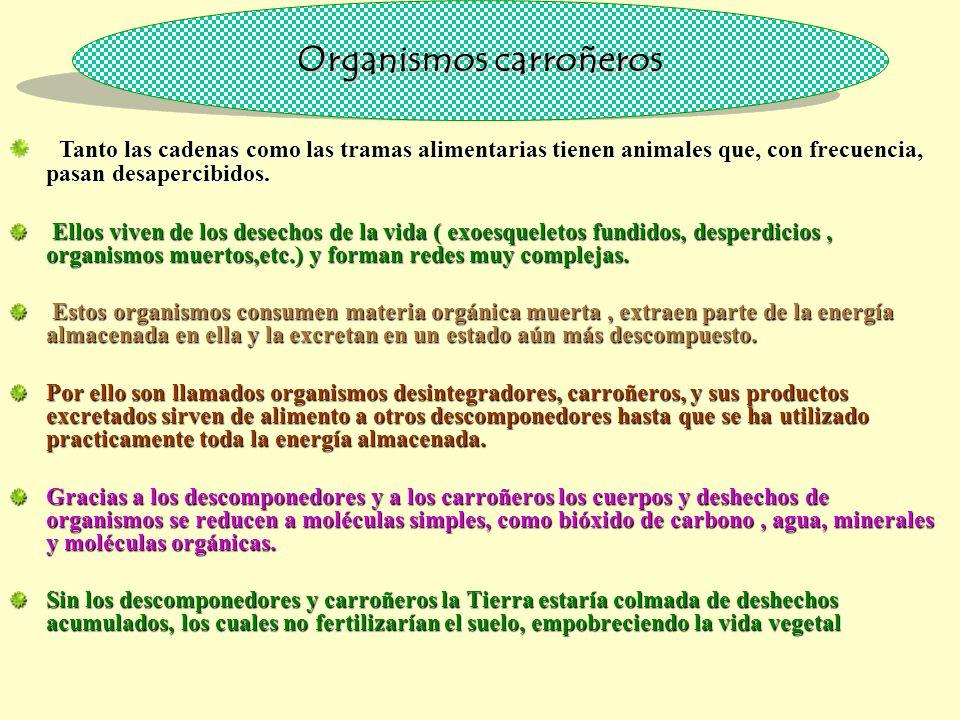 Organismos carroñeros Tanto las cadenas como las tramas alimentarias tienen animales que, con frecuencia, pasan desapercibidos.