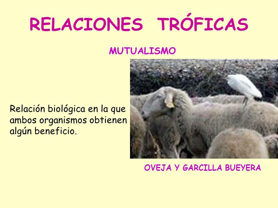RELACIONES TRÓFICAS Relación biológica en la que ambos organismos obtienen algún beneficio.