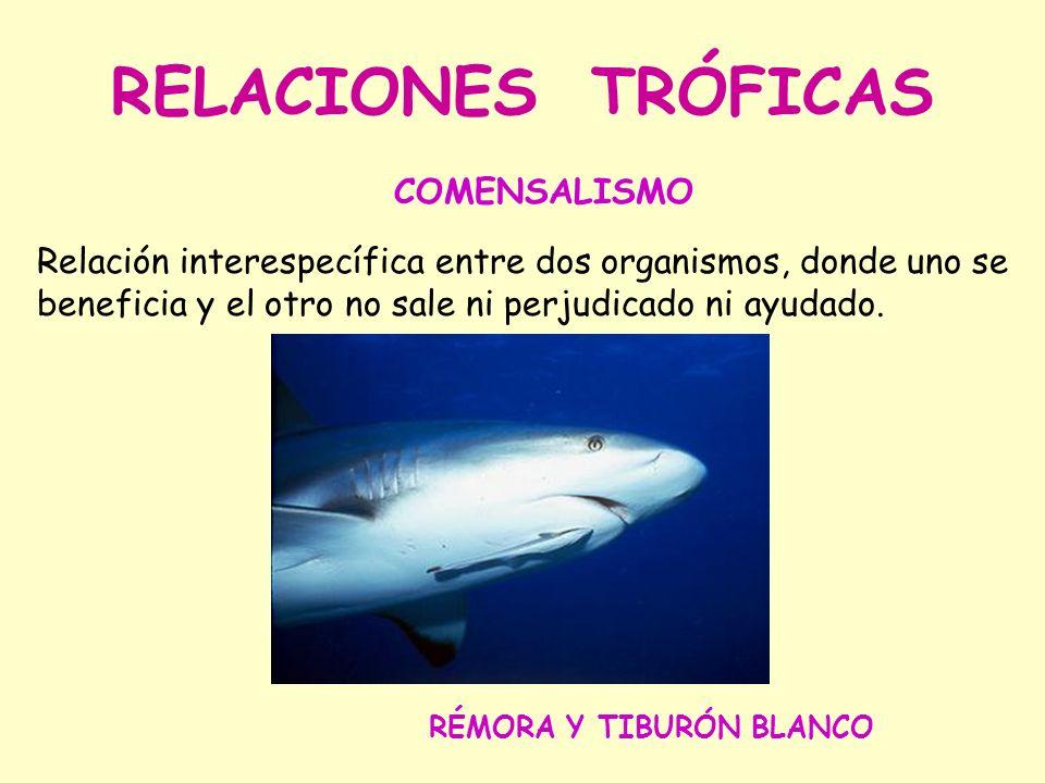 RELACIONES TRÓFICAS COMENSALISMO Relación interespecífica entre dos organismos, donde uno se beneficia y el otro no sale ni perjudicado ni ayudado.