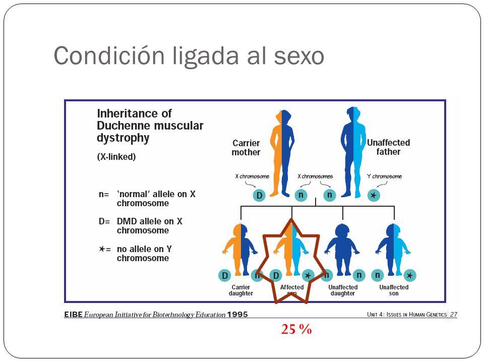 Condición ligada al sexo 25 %