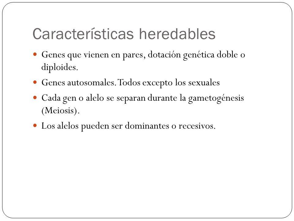 Características heredables Genes que vienen en pares, dotación genética doble o diploides. Genes autosomales. Todos excepto los sexuales Cada gen o al