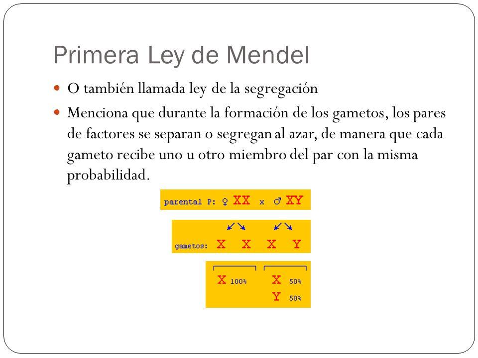 Primera Ley de Mendel O también llamada ley de la segregación Menciona que durante la formación de los gametos, los pares de factores se separan o seg