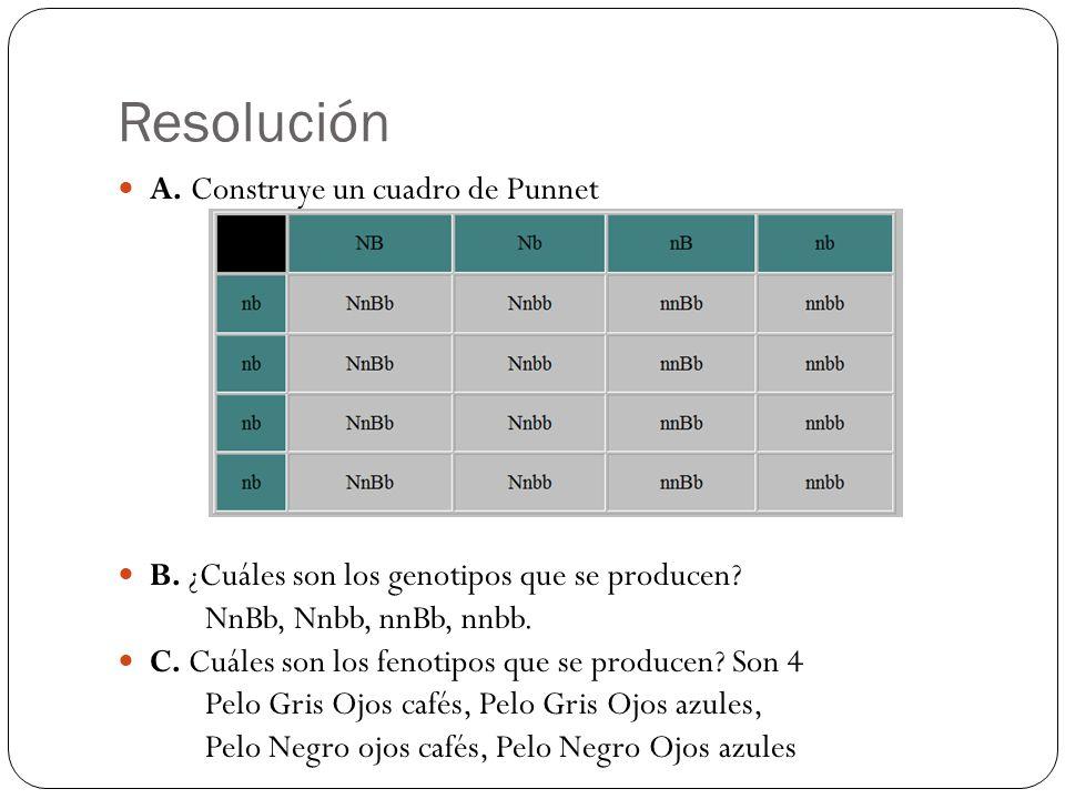 Resolución A. Construye un cuadro de Punnet B. ¿Cuáles son los genotipos que se producen? NnBb, Nnbb, nnBb, nnbb. C. Cuáles son los fenotipos que se p