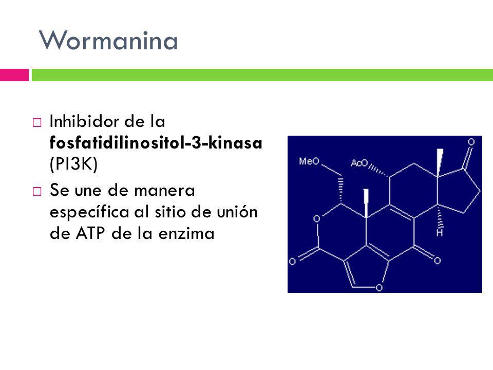 Wormanina Inhibidor de la fosfatidilinositol-3-kinasa (PI3K) Se une de manera específica al sitio de unión de ATP de la enzima