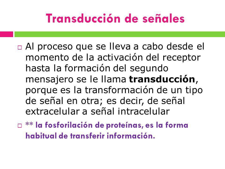 Transducción de señales Al proceso que se lleva a cabo desde el momento de la activación del receptor hasta la formación del segundo mensajero se le l