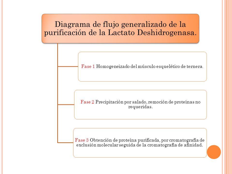 Diagrama de flujo generalizado de la purificación de la Lactato Deshidrogenasa. Fase 1 Homogeneizado del músculo esquelético de ternera. Fase 2 Precip