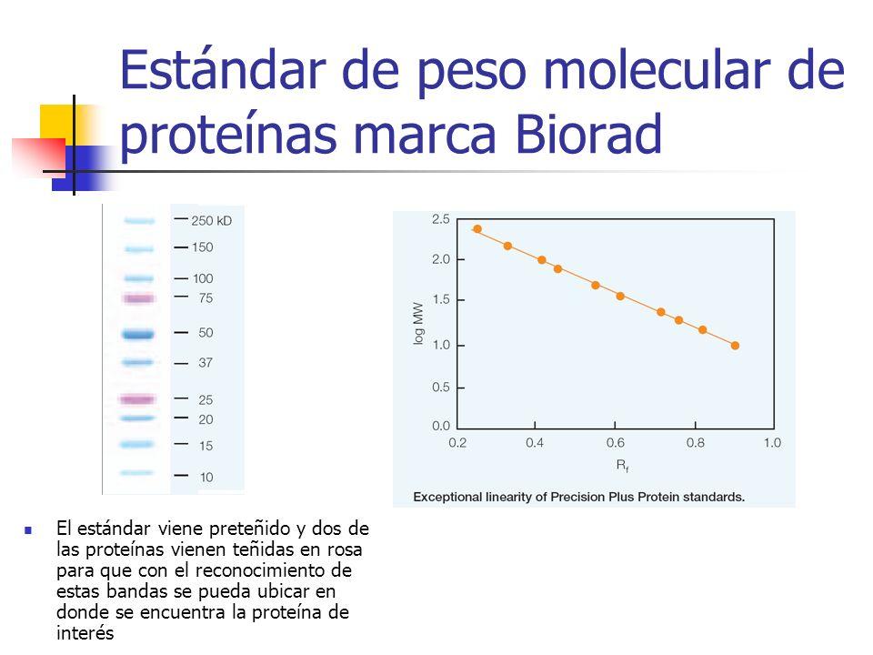 Estándar de peso molecular de proteínas marca Biorad El estándar viene preteñido y dos de las proteínas vienen teñidas en rosa para que con el reconoc