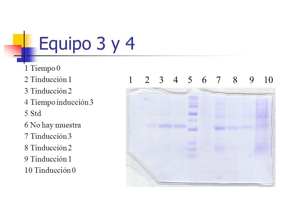 Equipos 5 y 6 1 2 3 4 5 6 7 8 9 10 1 Tiempo 0 2 Tinducción 1 3 Tinducción 2 4 Tiempo inducción 3 5 Std 6 al 9 es dificil ver la proteína, tal vez en el carril 8 y en el que si se ve es el carril 10 el Tiempo de inducción probablemente sea el más alto