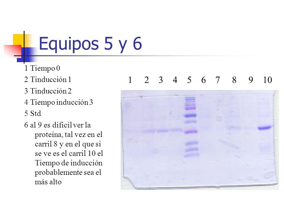 Equipos 5 y 6 1 2 3 4 5 6 7 8 9 10 1 Tiempo 0 2 Tinducción 1 3 Tinducción 2 4 Tiempo inducción 3 5 Std 6 al 9 es dificil ver la proteína, tal vez en e