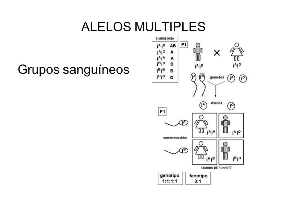 CODOMINANCIA.- La relación entre dos alelos en los que ambos contribuyen al fenotipo del heterocigoto.