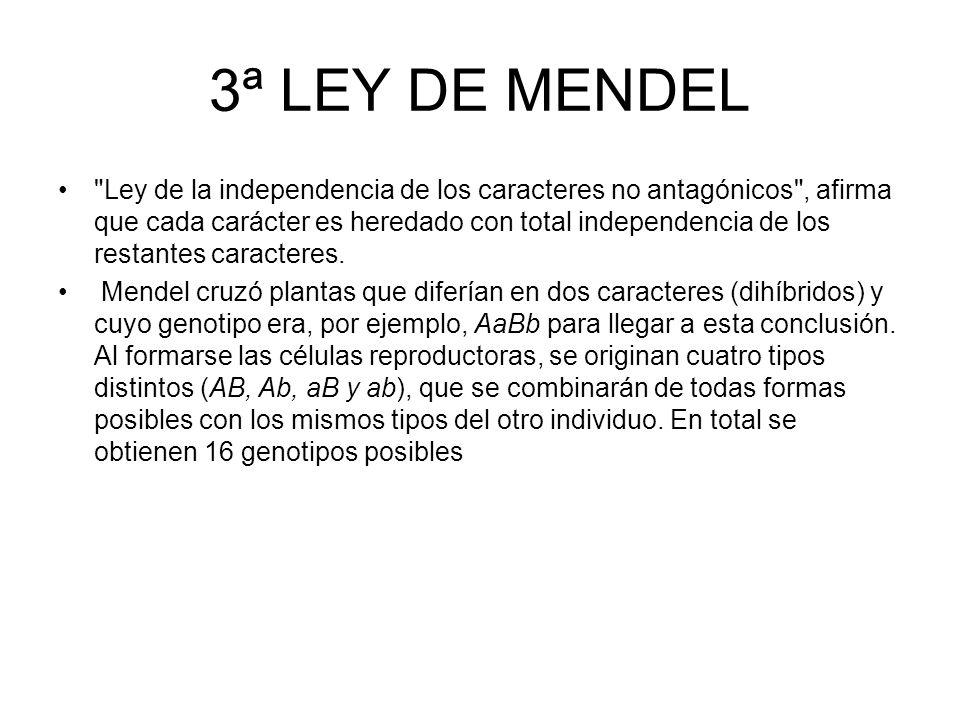 2ª LEY DE MENDEL