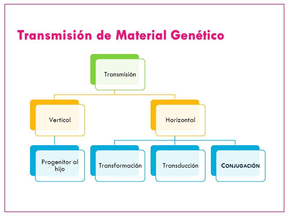 TransmisiónVertical Progenitor al hijo HorizontalTransformaciónTransducciónC ONJUGACIÓN