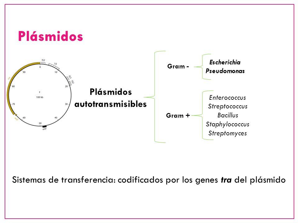 Sistemas de transferencia: codificados por los genes tra del plásmido Plásmidos autotransmisibles Escherichia Pseudomonas Enterococcus Streptococcus B