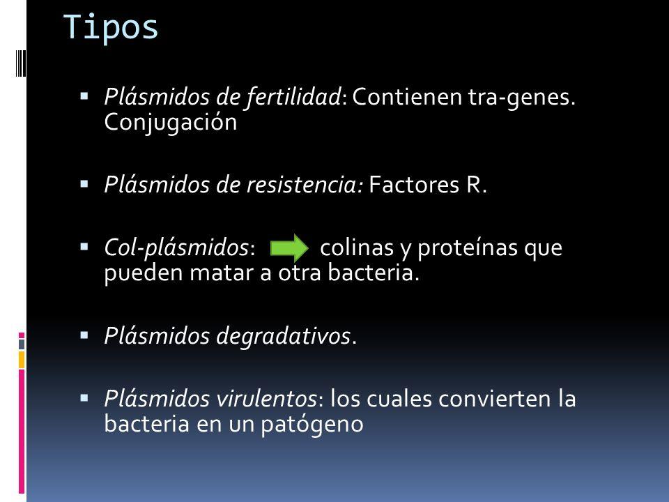 Tipos Plásmidos de fertilidad: Contienen tra-genes. Conjugación Plásmidos de resistencia: Factores R. Col-plásmidos: colinas y proteínas que pueden ma