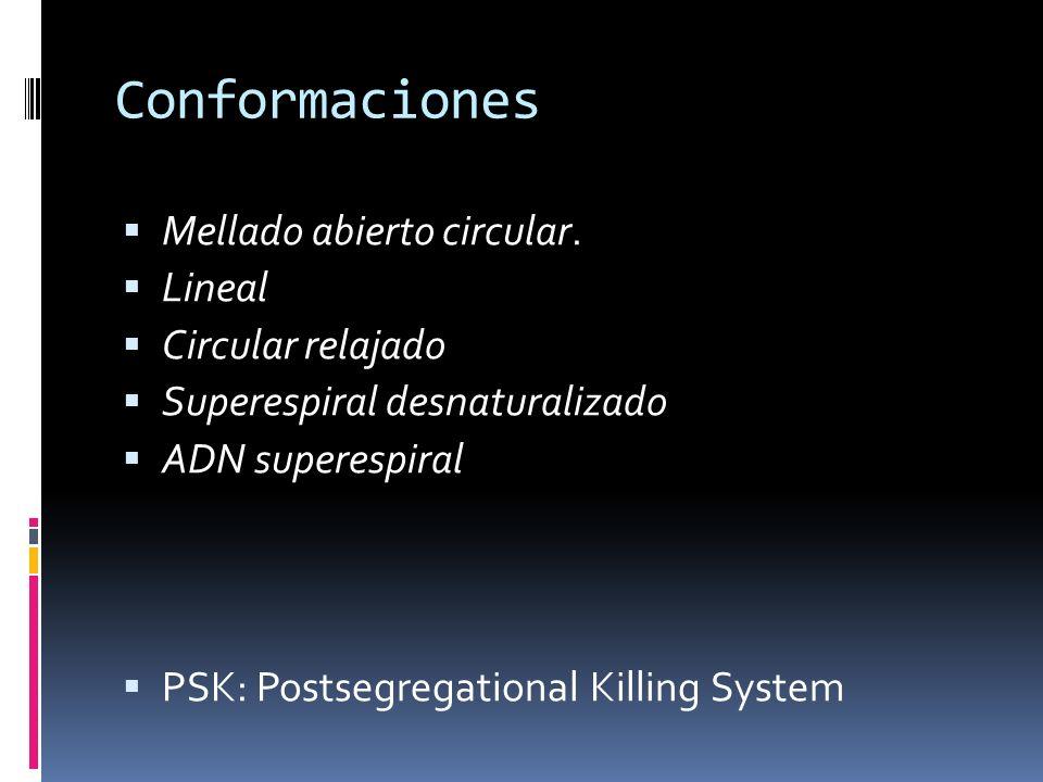 Conformaciones Mellado abierto circular. Lineal Circular relajado Superespiral desnaturalizado ADN superespiral PSK: Postsegregational Killing System