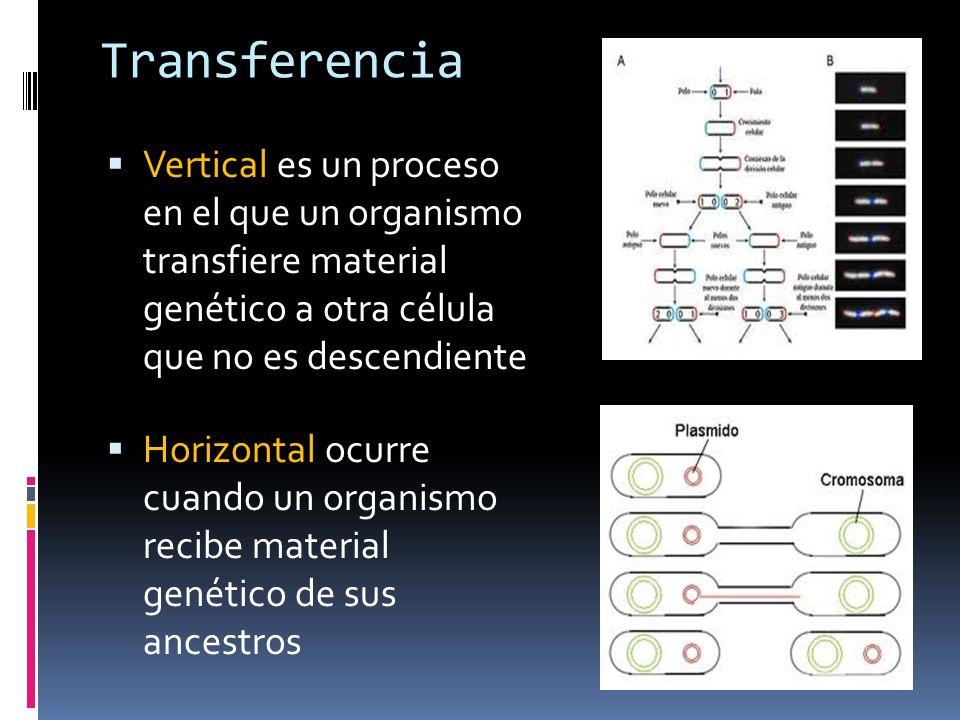 Transferencia Vertical es un proceso en el que un organismo transfiere material genético a otra célula que no es descendiente Horizontal ocurre cuando