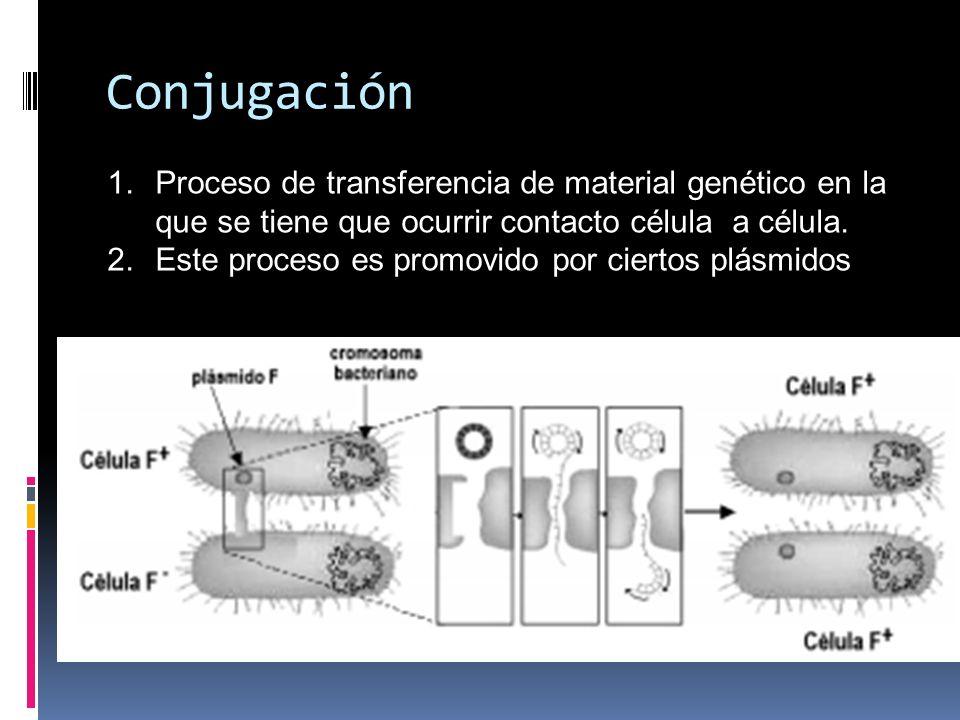 1.Proceso de transferencia de material genético en la que se tiene que ocurrir contacto célula a célula. 2.Este proceso es promovido por ciertos plásm