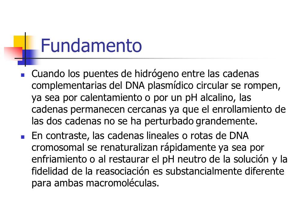 Fundamento Cuando los puentes de hidrógeno entre las cadenas complementarias del DNA plasmídico circular se rompen, ya sea por calentamiento o por un pH alcalino, las cadenas permanecen cercanas ya que el enrollamiento de las dos cadenas no se ha perturbado grandemente.