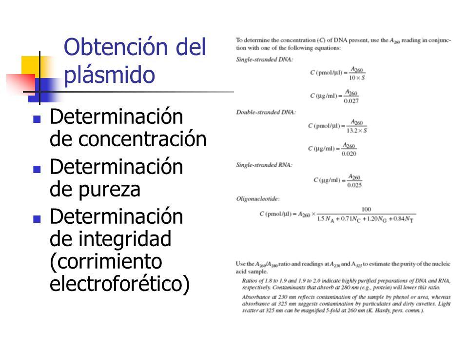 Obtención del plásmido Determinación de concentración Determinación de pureza Determinación de integridad (corrimiento electroforético)