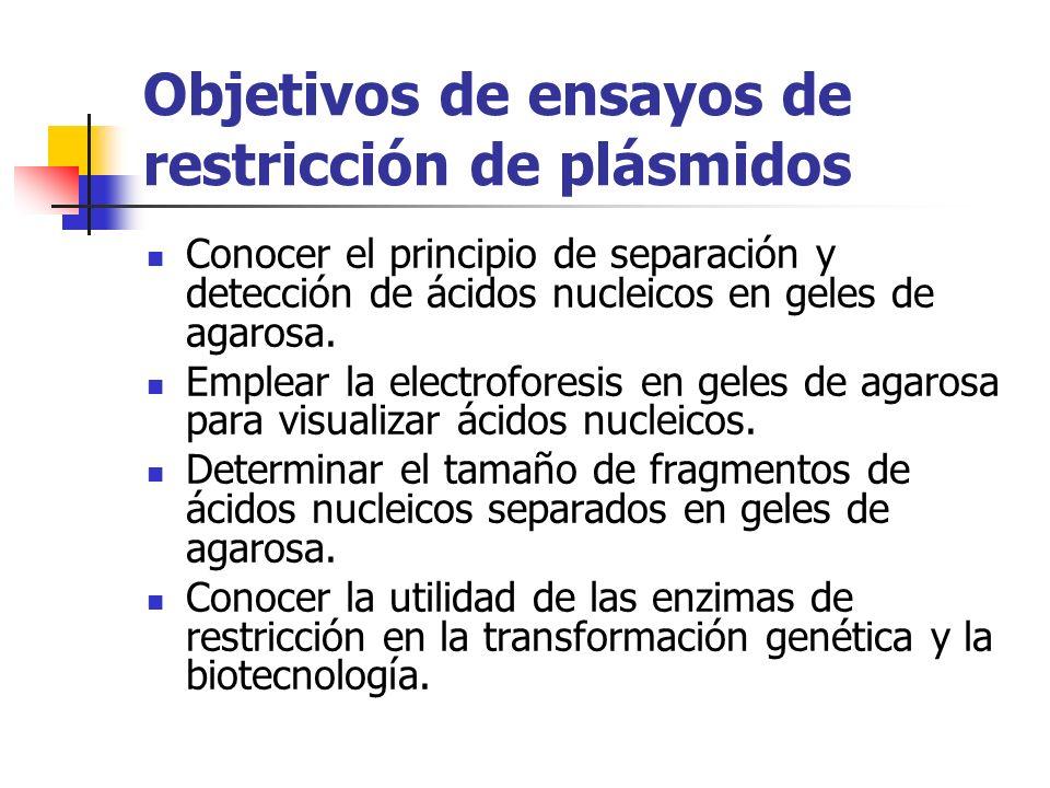Objetivos de ensayos de restricción de plásmidos Conocer el principio de separación y detección de ácidos nucleicos en geles de agarosa. Emplear la el