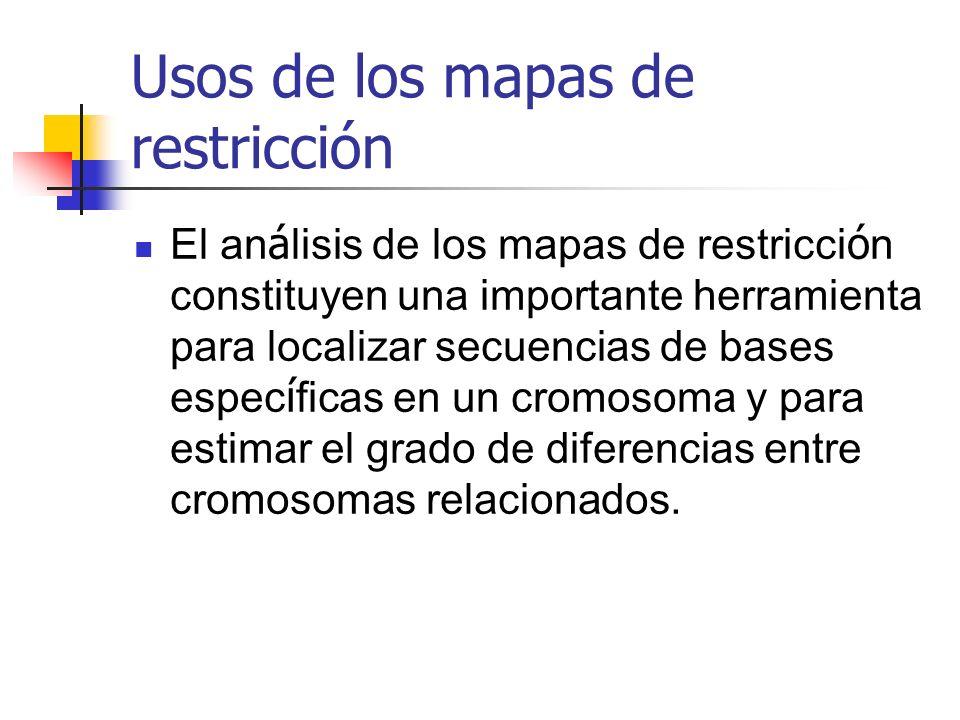 Usos de los mapas de restricción El an á lisis de los mapas de restricci ó n constituyen una importante herramienta para localizar secuencias de bases