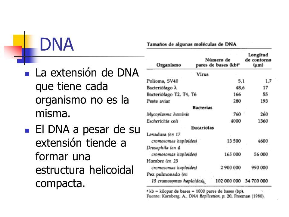 DNA La extensión de DNA que tiene cada organismo no es la misma. El DNA a pesar de su extensión tiende a formar una estructura helicoidal compacta.